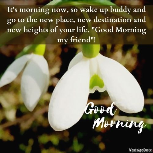 whatsapp good morning messages hd images